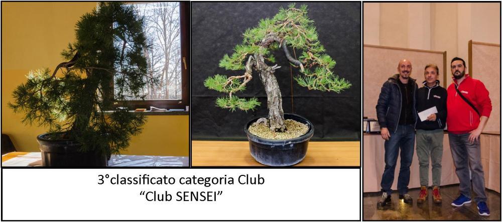 3° club SENSEI