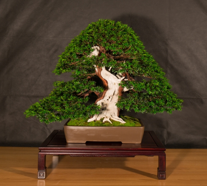 CONGRESSO BONSAI RIVALTA 2016-2146