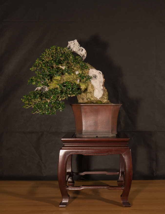 CONGRESSO BONSAI RIVALTA 2016-2147