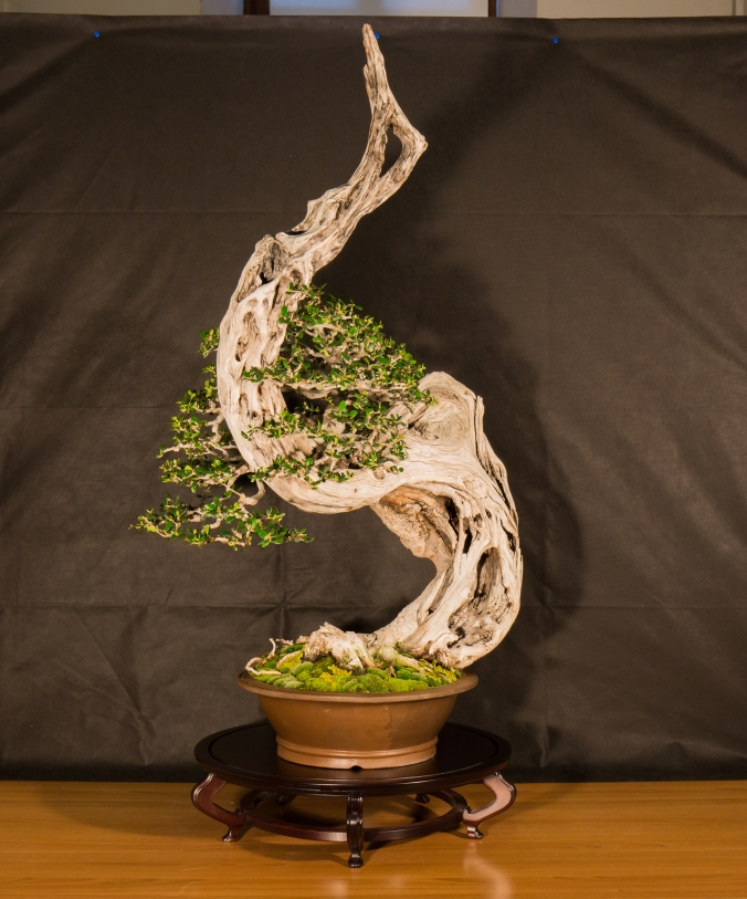CONGRESSO BONSAI RIVALTA 2016-2149
