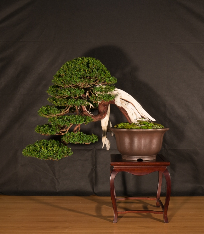 CONGRESSO BONSAI RIVALTA 2016-2150