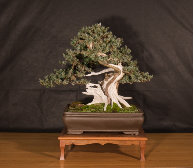 CONGRESSO BONSAI RIVALTA 2016-2151