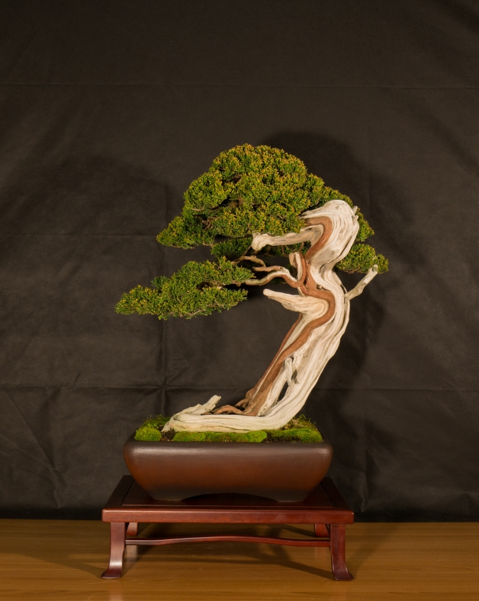 CONGRESSO BONSAI RIVALTA 2016-2152