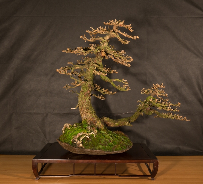 CONGRESSO BONSAI RIVALTA 2016-2154