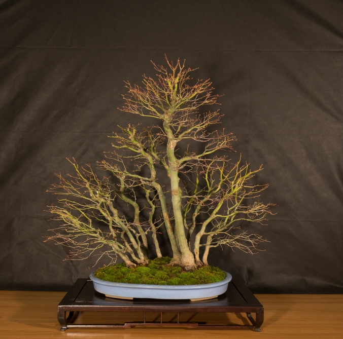 CONGRESSO BONSAI RIVALTA 2016-2155