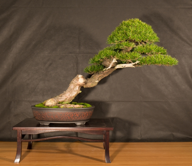 CONGRESSO BONSAI RIVALTA 2016-2157
