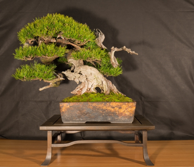 CONGRESSO BONSAI RIVALTA 2016-2158