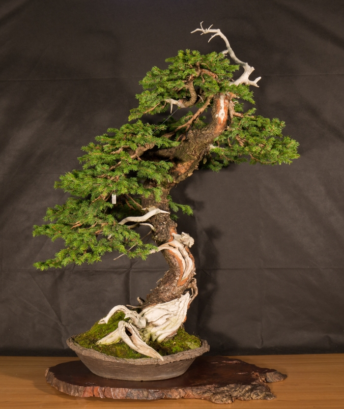 CONGRESSO BONSAI RIVALTA 2016-2159