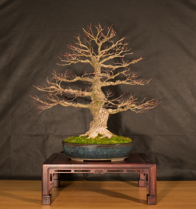CONGRESSO BONSAI RIVALTA 2016-2160