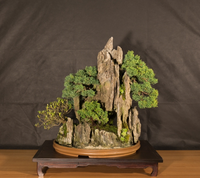 CONGRESSO BONSAI RIVALTA 2016-2161