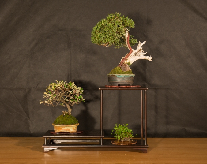 CONGRESSO BONSAI RIVALTA 2016-2162