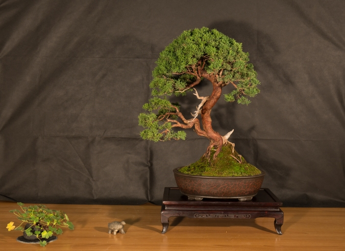 CONGRESSO BONSAI RIVALTA 2016-2163