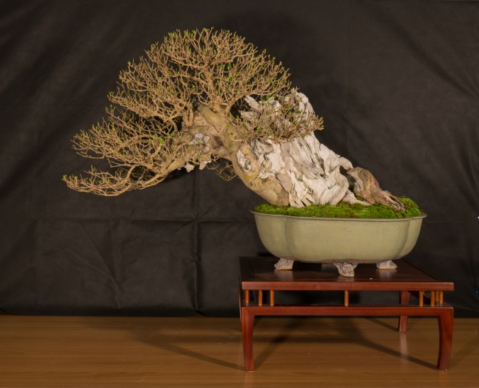 CONGRESSO BONSAI RIVALTA 2016-2166
