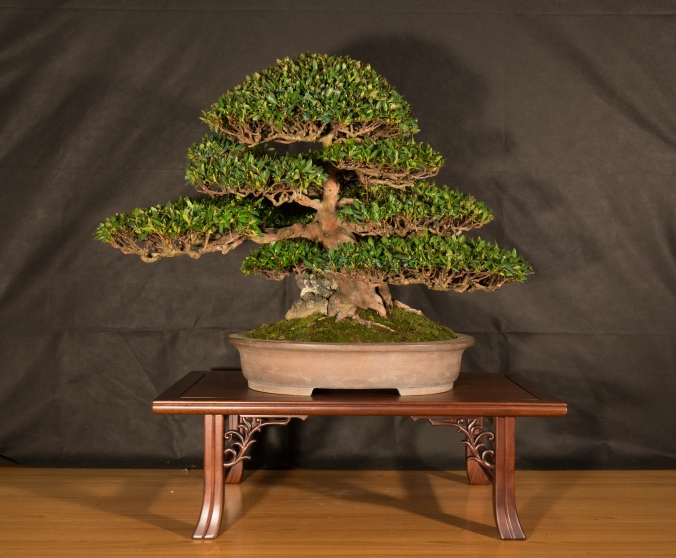 CONGRESSO BONSAI RIVALTA 2016-2167