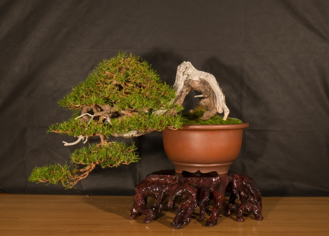 CONGRESSO BONSAI RIVALTA 2016-2170