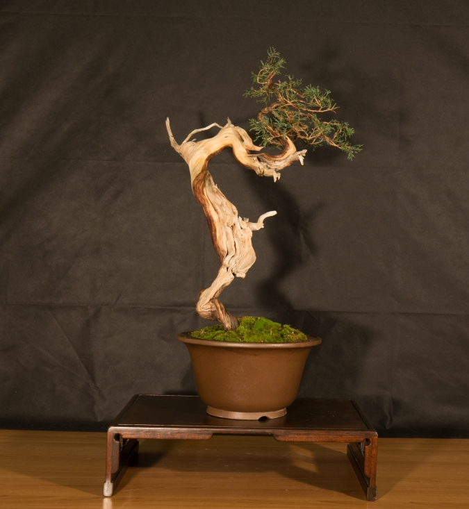 CONGRESSO BONSAI RIVALTA 2016-2171