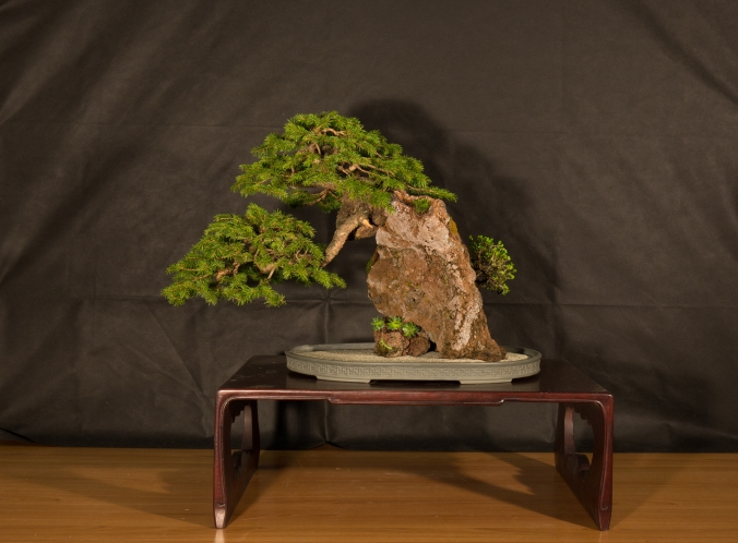 CONGRESSO BONSAI RIVALTA 2016-2172