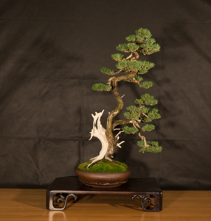 CONGRESSO BONSAI RIVALTA 2016-2173
