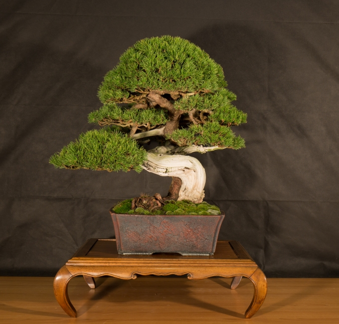 CONGRESSO BONSAI RIVALTA 2016-2177