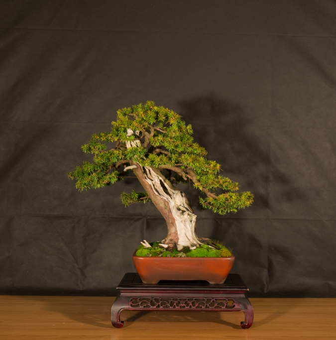 CONGRESSO BONSAI RIVALTA 2016-2178
