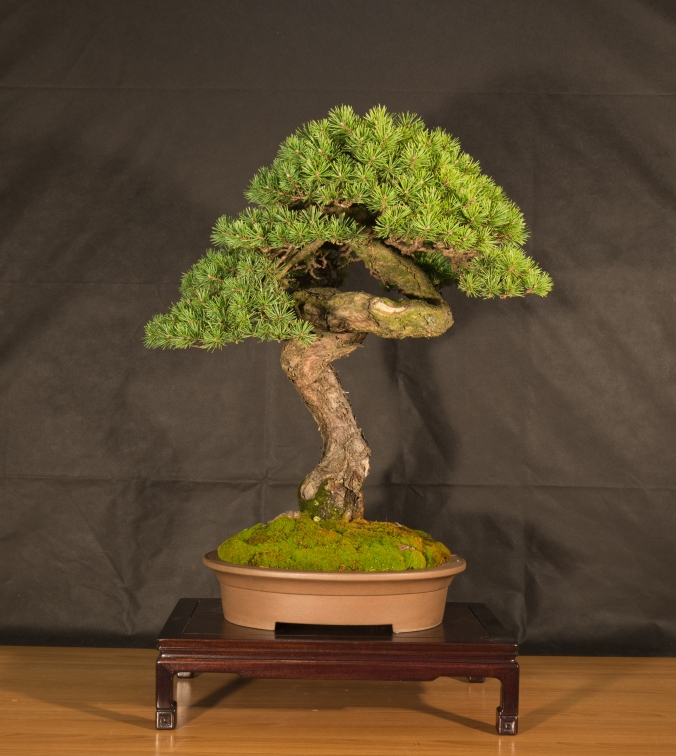 CONGRESSO BONSAI RIVALTA 2016-2181