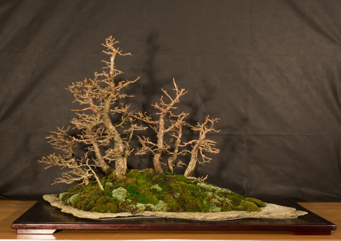 CONGRESSO BONSAI RIVALTA 2016-2182