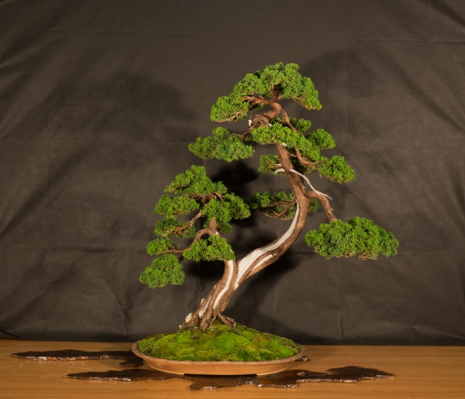 CONGRESSO BONSAI RIVALTA 2016-2183