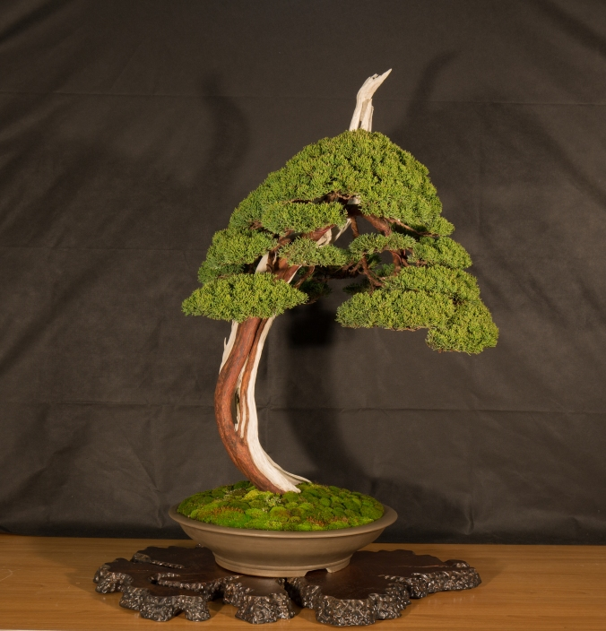 CONGRESSO BONSAI RIVALTA 2016-2184