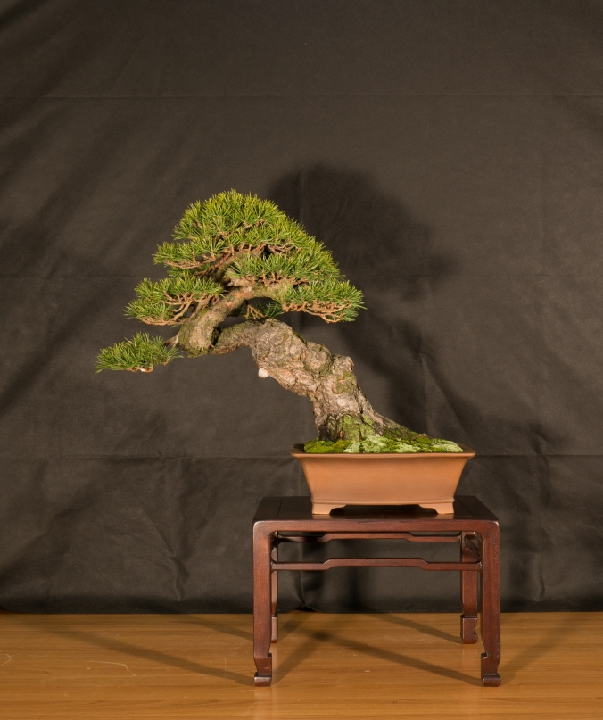 CONGRESSO BONSAI RIVALTA 2016-2185