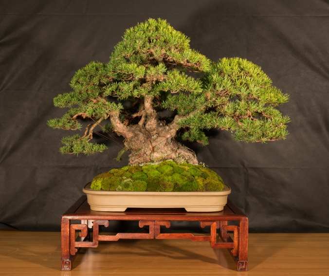 CONGRESSO BONSAI RIVALTA 2016-2187