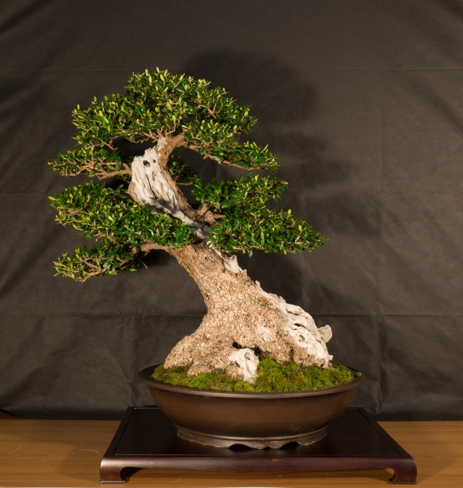 CONGRESSO BONSAI RIVALTA 2016-2188