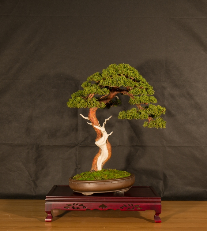 CONGRESSO BONSAI RIVALTA 2016-2189