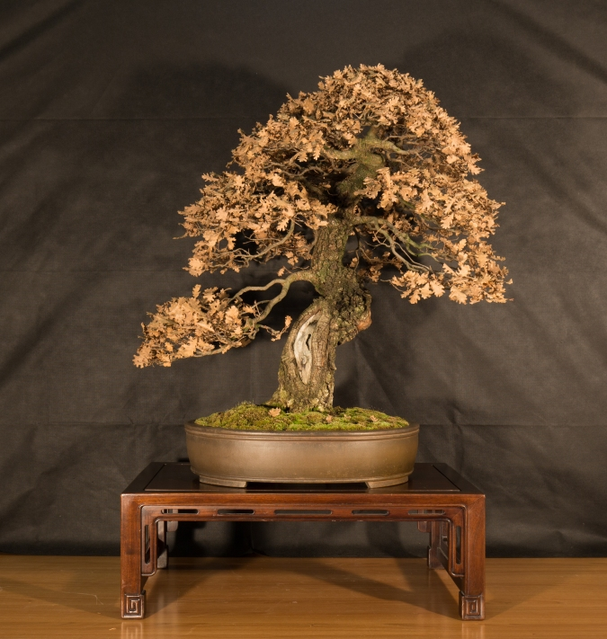 CONGRESSO BONSAI RIVALTA 2016-2190