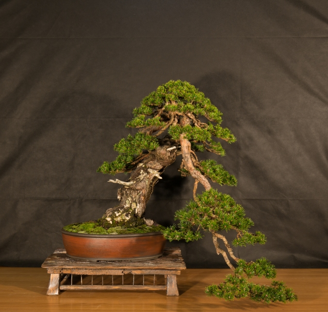 CONGRESSO BONSAI RIVALTA 2016-2191