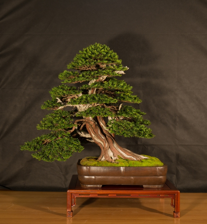 CONGRESSO BONSAI RIVALTA 2016-2192