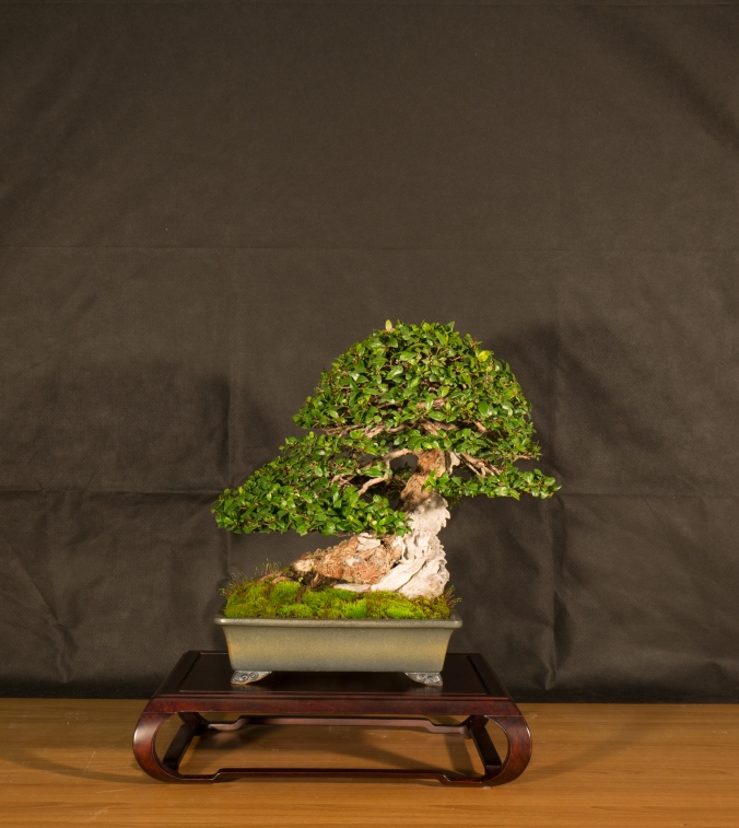 CONGRESSO BONSAI RIVALTA 2016-2193