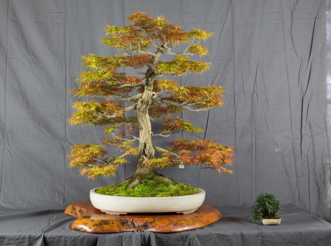 CONGRESSO BONSAI RIVALTA MAR 2017-12
