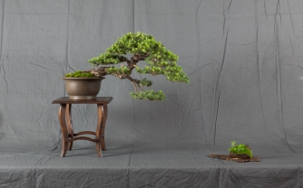 CONGRESSO BONSAI RIVALTA MAR 2017-14