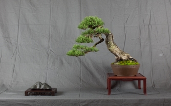 CONGRESSO BONSAI RIVALTA MAR 2017-15