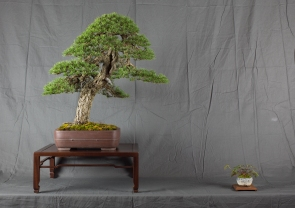 CONGRESSO BONSAI RIVALTA MAR 2017-16