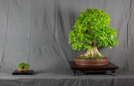 CONGRESSO BONSAI RIVALTA MAR 2017-17