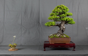 CONGRESSO BONSAI RIVALTA MAR 2017-19