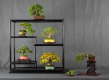 CONGRESSO BONSAI RIVALTA MAR 2017-2