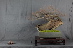 CONGRESSO BONSAI RIVALTA MAR 2017-20