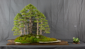 CONGRESSO BONSAI RIVALTA MAR 2017-21