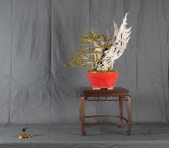 CONGRESSO BONSAI RIVALTA MAR 2017-24