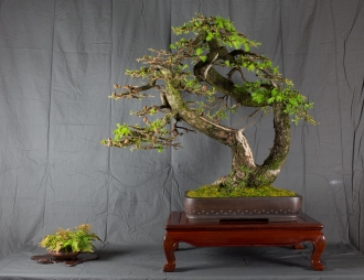 CONGRESSO BONSAI RIVALTA MAR 2017-25