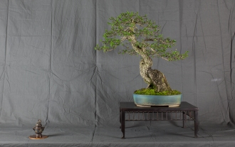 CONGRESSO BONSAI RIVALTA MAR 2017-26