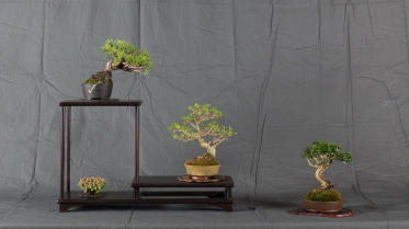 CONGRESSO BONSAI RIVALTA MAR 2017-28