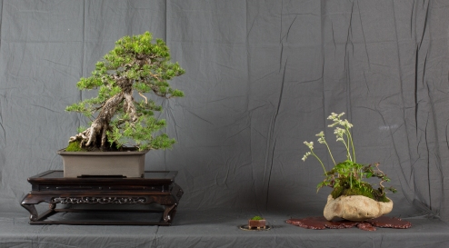 CONGRESSO BONSAI RIVALTA MAR 2017-29